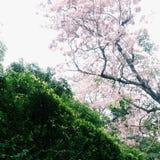 kwiaty różowią drzewa obraz stock