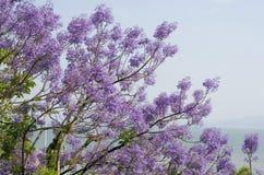 kwiaty różowią niebo Obraz Royalty Free
