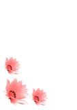 kwiaty różowią trzy Obraz Royalty Free