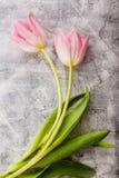 kwiaty różowią tulipany zdjęcia stock