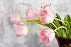 kwiaty różowią tulipany zdjęcie royalty free