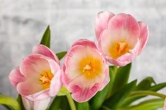 kwiaty różowią tulipany zdjęcie stock