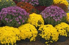 kwiaty różnych Fotografia Royalty Free