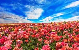 Kwiaty r dla eksporta Obrazy Royalty Free