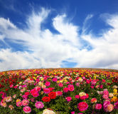 Kwiaty r dla eksporta Zdjęcie Royalty Free