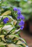 Kwiaty r w pepinierach Obraz Royalty Free