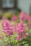 Kwiaty/roślina w przedpolu z ogrodowym tłem Zdjęcia Royalty Free