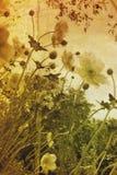 kwiaty roczne Zdjęcia Royalty Free