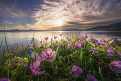 Kwiaty rzeką fotografia stock
