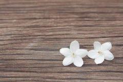 Kwiaty są biali z drewnem w wiośnie Obrazy Stock