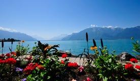 kwiaty słoneczny dzień Zdjęcie Stock