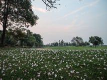 Kwiaty są spada puszkiem na zielonej trawie Obrazy Royalty Free