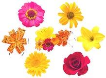 Kwiaty set. Zdjęcie Stock