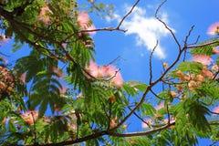 Kwiaty silktree zdjęcia royalty free