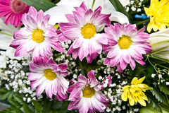 kwiaty składu Obrazy Stock