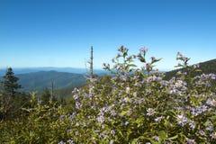 Kwiaty Smokey góry Zdjęcia Stock