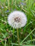 Kwiaty, stokrotki, przyroda, piękno, dziewczyny Zdjęcia Stock