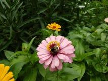 kwiaty stubarwnego Obrazy Stock