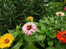 kwiaty stubarwnego Zdjęcie Royalty Free