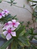 kwiaty stwarzać ognisko domowe fotografia stock