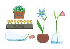 kwiaty stwarzać ognisko domowe Obraz Stock