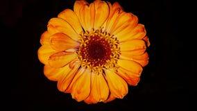 kwiaty stwarzać ognisko domowe obrazy stock