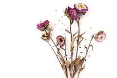Kwiaty Suszący liście, biały tło Obrazy Royalty Free