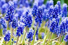 kwiaty tła wiosny Zdjęcia Royalty Free