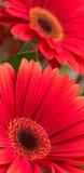 kwiaty tło obraz royalty free