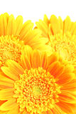 kwiaty tło Fotografia Stock