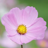 kwiaty tła lato Fotografia Stock