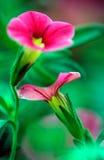 kwiaty tańczyć Obraz Stock