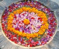 Kwiaty target595_0_ na garnku w Bali Obrazy Royalty Free