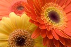 kwiaty tekstury tło Obraz Royalty Free