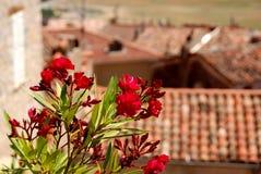 kwiaty tooftop Fotografia Stock