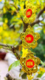 Kwiaty tradycyjny Wietnamski nowy rok obraz stock