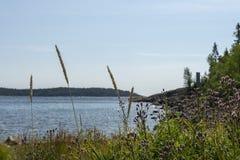 Kwiaty, trawa w przedpolu i seashore w tle fotografia stock