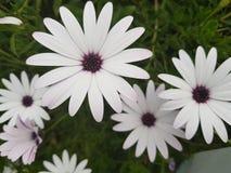 Kwiaty, trawa, wiosna, s?oneczny dzie? w Cypr, kwitn? jak stokrotki obrazy royalty free