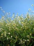 kwiaty trawy zielone white Zdjęcia Stock