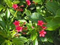 kwiaty trochę Obrazy Stock