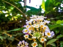 kwiaty trochę Obraz Stock