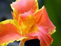 kwiaty tropikalnego Obrazy Stock
