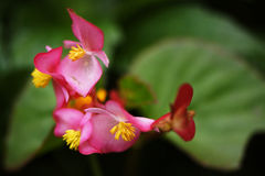 kwiaty tropikalnego obrazy royalty free