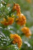 kwiaty tropikalnego obraz stock