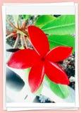 kwiaty tropikalnego zdjęcie royalty free