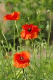 kwiaty trzy Obrazy Stock