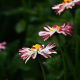 Kwiaty trzy lub cztery zdjęcia royalty free