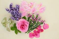 Kwiaty Używać w Ziołowej medycynie obrazy stock