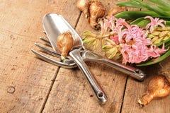 kwiaty uprawiają ogródek hiacynt Zdjęcia Royalty Free