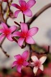 kwiaty uroczyn obrazy royalty free